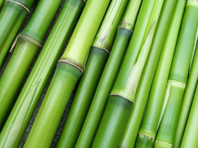 Bambusz, a zero waste szupernövény
